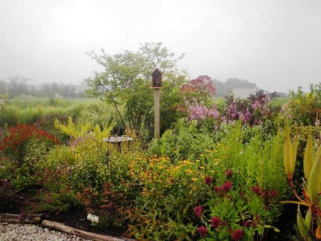 Our Lakes And Streams Thank Homeowners >> Gardenscapes By Joanna - Rain Gardens